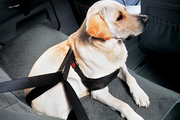 ¿Estás seguro de que llevas bien a tu mascota en el coche?